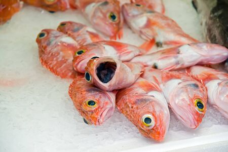 fish in a market photo