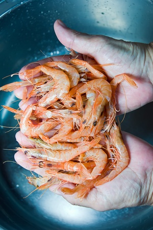 fish vendor: fish vendor cleaning shrimps