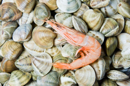 shellfish in a market photo