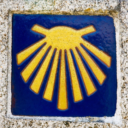 pilgrim shell photo