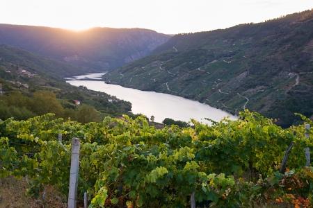sil: Sil canyon, Ribeira Sacra, Ourense, Galicia, Spain. Vineyards