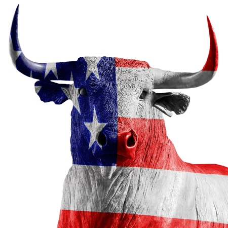 USA bull photo