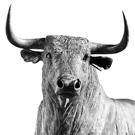 bull on white background photo