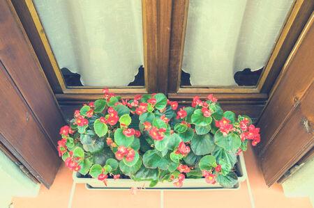 planter: planter Stock Photo