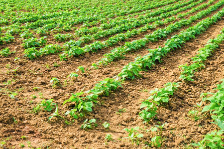 vegetable cultivation photo