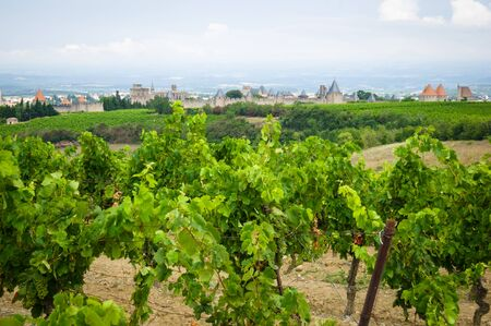fortified: vineyards in Carcassonne, France Stock Photo