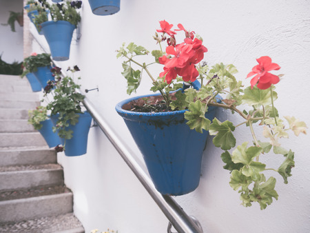 spanish homes: Flowers in flowerpot on the walls on streets of Cordoba, Spain Stock Photo