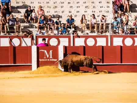 corrida de toros: MALAGA, ESPA�A - 12 de agosto: corrida de toros el 12 de agosto, 2015, en M�laga, Espa�a. La Malagueta es la plaza de toros de M�laga (Andaluc�a, Espa�a), que se llev� a cabo el primer evento en 1876.