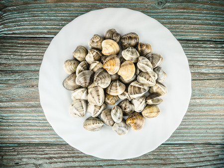 clams: clams on a white plate Stock Photo