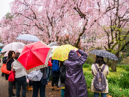 blends: TOKYO, JAPAN - MARCH 31: Shinjuku Goen on March 31, 2015 in Tokyo, Japan. The garden, which is 58.3 hectares in area, blends three distinct styles: a French Formal and English Landscape in the north and to the south a Japanese traditional.