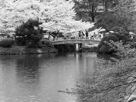 hectares: TOKYO, JAPAN - MARCH 31: Shinjuku Goen on March 31, 2015 in Tokyo, Japan. The garden, which is 58.3 hectares in area, blends three distinct styles: a French Formal and English Landscape in the north and to the south a Japanese traditional.