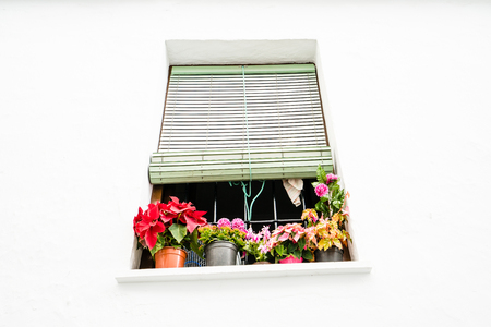 from below: Potted flowers on window with shutter in white wall from below.