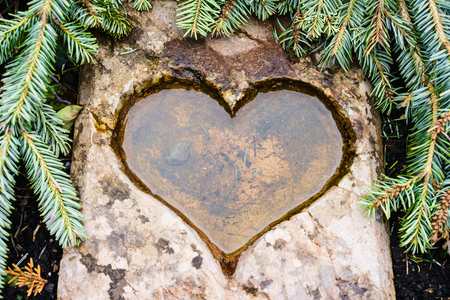 hearted: Hearted pool full of water in fir tree