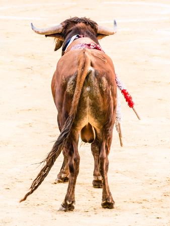 corrida de toros: corrida