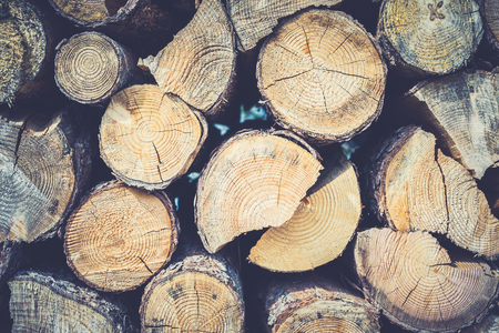 chopped: View on chopped wooden trunks from above