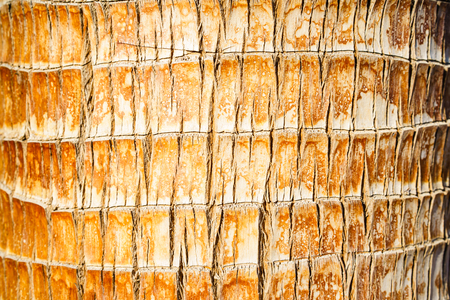 Close-up of brown textured tree trunk in daylight