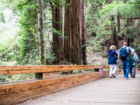 muir: MUIR WOODS, USA - SEPTEMBER 16: unidentified tourists on September 16, 2015 in California, United States. It is part of the Golden Gate National Recreation Area.
