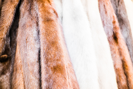 The assortment of different colored furskins in the market.