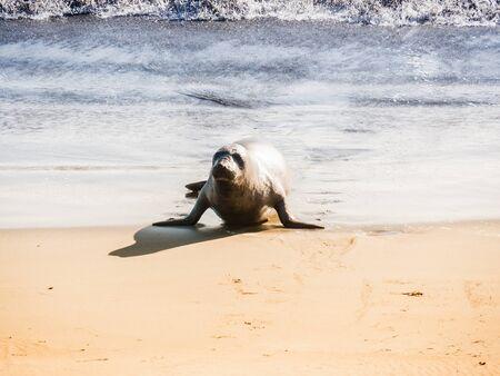sea lions in Big Sur in California, USA