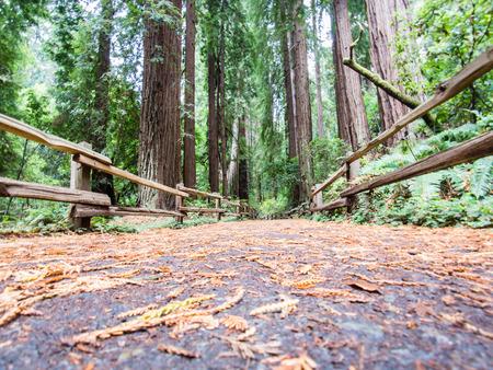 Muir Woods, California, USA Stock Photo