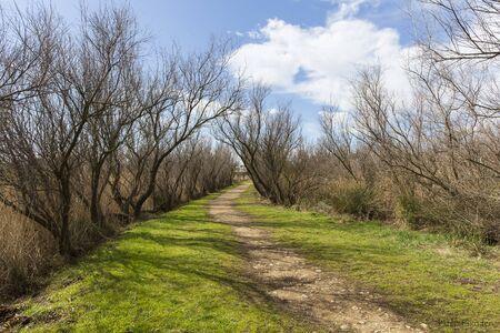 Landscape of natural park of Las Marismas del Ampurdán , Girona, Catalonia, Spain