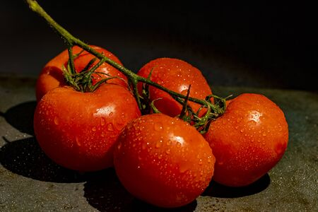 Tomatoes branch on black background and yellow light. 스톡 콘텐츠
