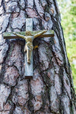 nailed: Wooden crucifix nailed to the pine trunk in the forest.