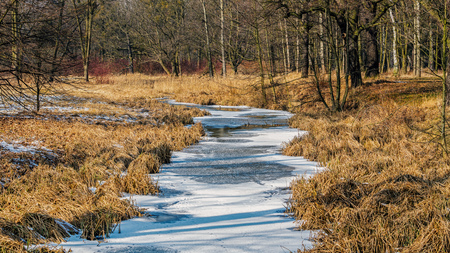 A frozen river in the forest