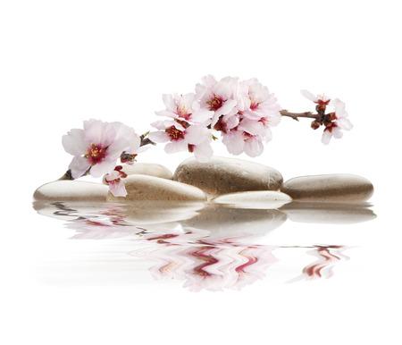 orchidee: pietre con fiore di mandorle con sfondo bianco
