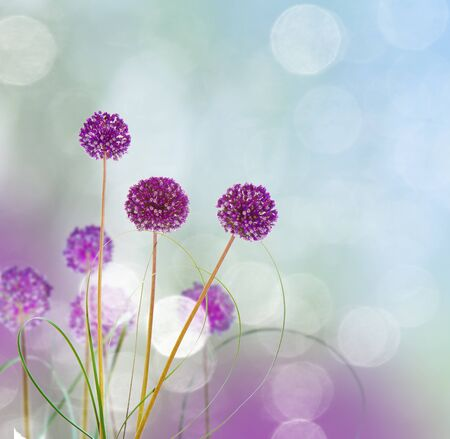 flowers backgrounds photo