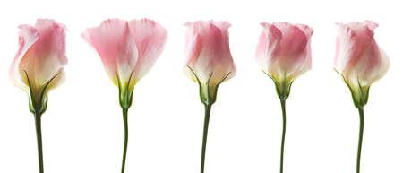 whitern: flowers background Stock Photo