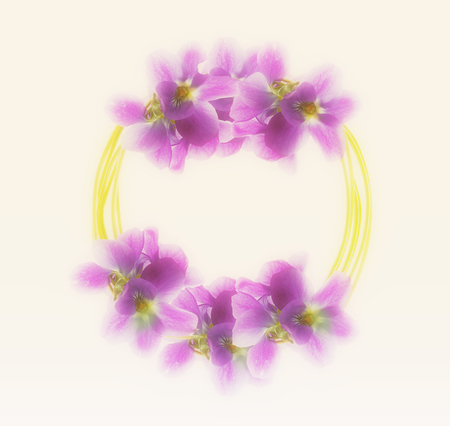 lila: violet flowers isolated