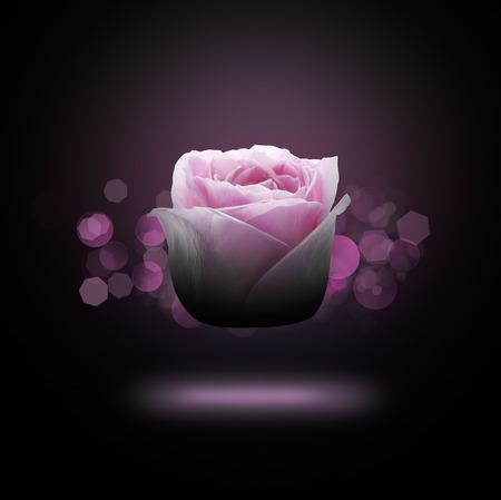 fiore isolato: Fiore isolato su sfondo nero