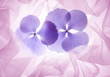 fleurs romantique: fleurs romantiques fond