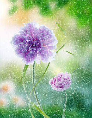 pfingstrosen: Pfingstrosen Blumen-Effekt Vintage