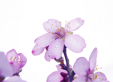 fiore isolato: