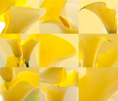 calas blancas: callas flores fondos Foto de archivo
