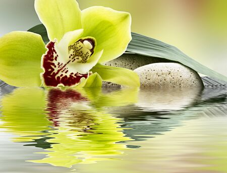spa of orchids and stones in water Stock Photo
