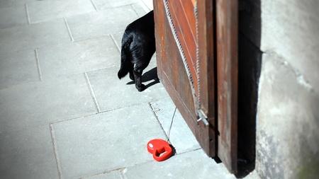 Chien noir attendant son propriétaire à la porte. Banque d'images - 91048577