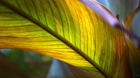 Close up colorful leaf texture with backlit Stock Photo