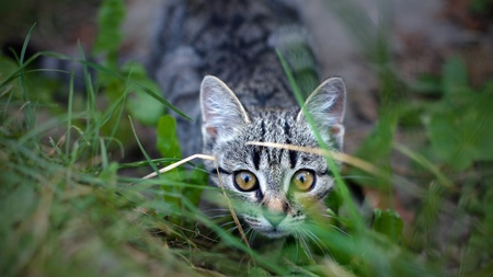 Street cat hides behind of grass - close up