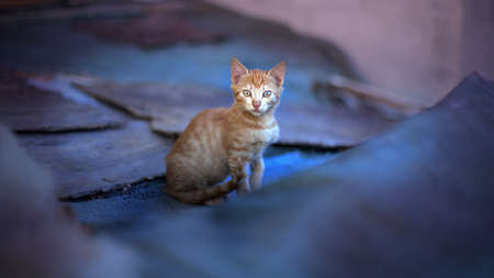 Yellow kitten sits on the fabric surface
