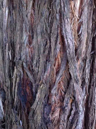 Tree Bark Zdjęcie Seryjne