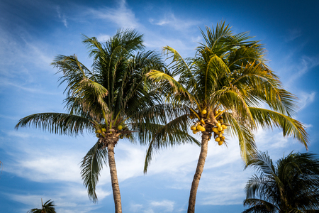 Two palm trees by the shore at a tropical paradise with a blue sky background