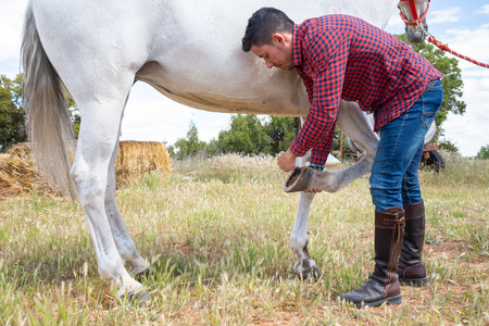 Young male in casual outfit using brush to remove grass and dirt from horseshoe of white horse in meadow