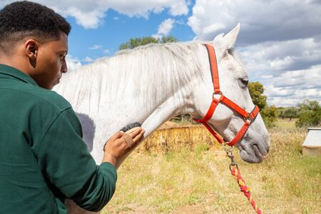 Young African American male using brush to care for hair of white horse on cloudy day ranch