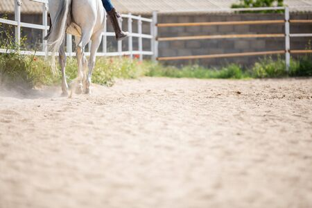 Unrecognizable male riding white horse on sandy ground of enclosure on sunny day on farm