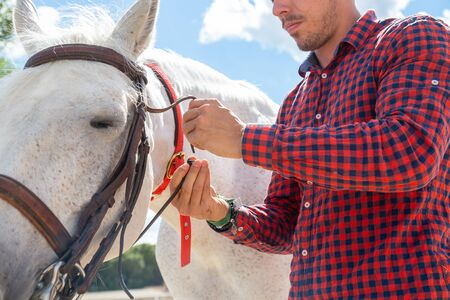 Young male in casual outfit fastening bridle near mouth of white horse while standing in paddock on sunny day on farm Archivio Fotografico