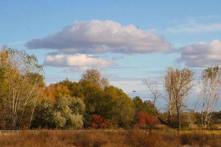 eagle falls: Lone Bird in Autumn Stock Photo