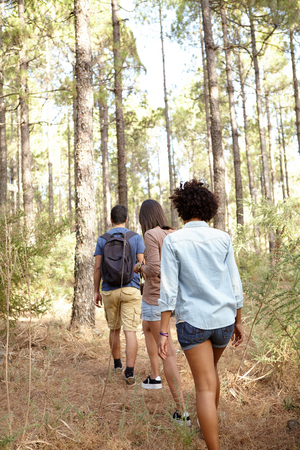 looking ahead: Three friends hiking through a pine tree forest in the late afternoon shadows while wearing casual clothing looking ahead